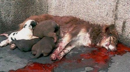 Tunisie – Les municipalités abattent les chiens et refusent de regarder la vérité en face