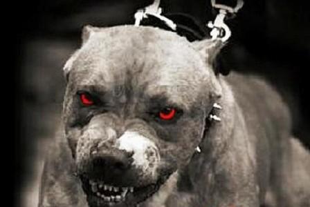 Tunisie – Sfax : Un forcené agresse une personne, se barricade chez lui et lâche ses chiens sur les forces de l'ordre