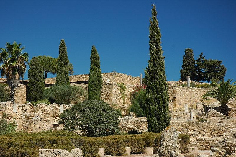 Nouvelles découvertes archéologiques à Carthage