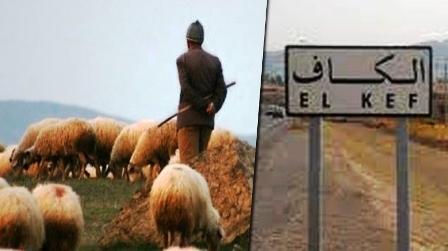 Tunisie – Le berger disparu sur la montagne du Touiref retrouvé
