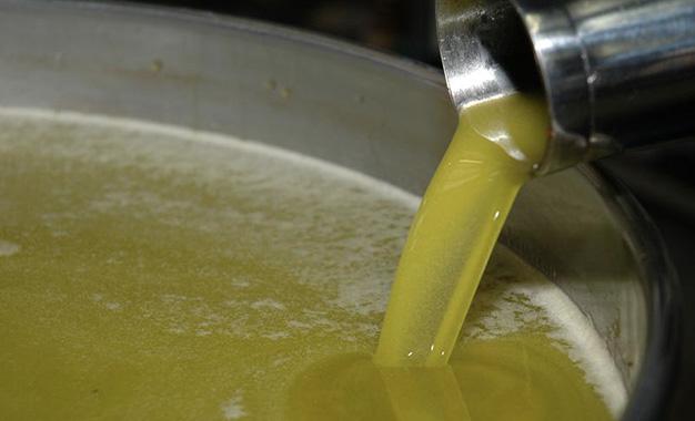 Huile d'olive: Baisse de la production pour l'actuelle saison