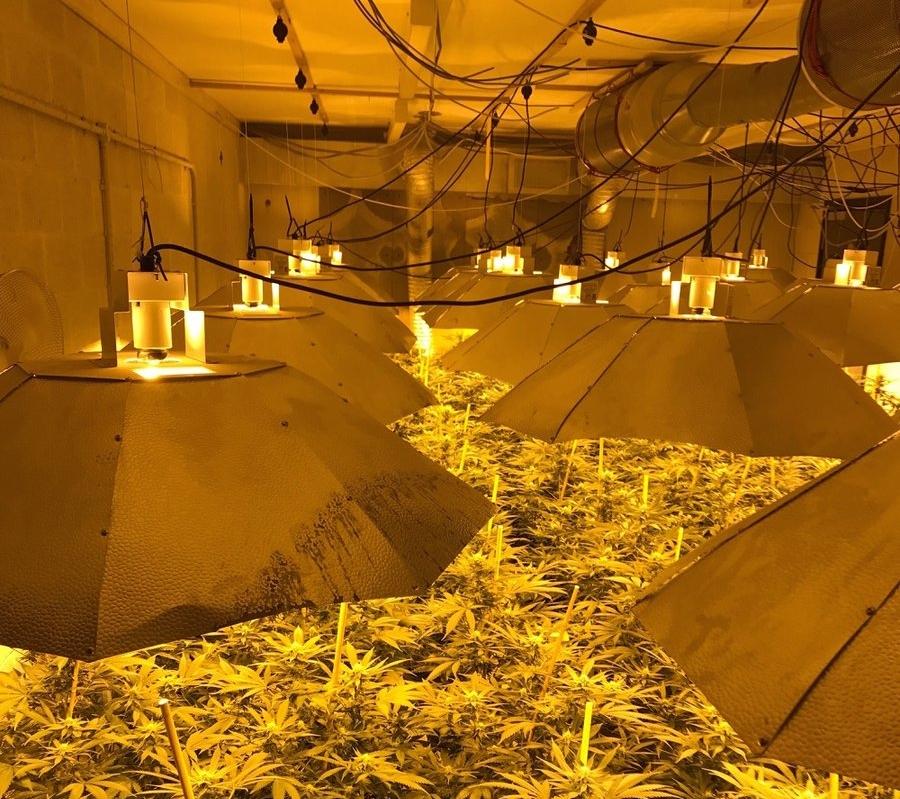 cannabisangleterre