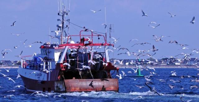 Tunisie: Arraisonnement d'un bateau de pêche égyptien dans les eaux territoriales