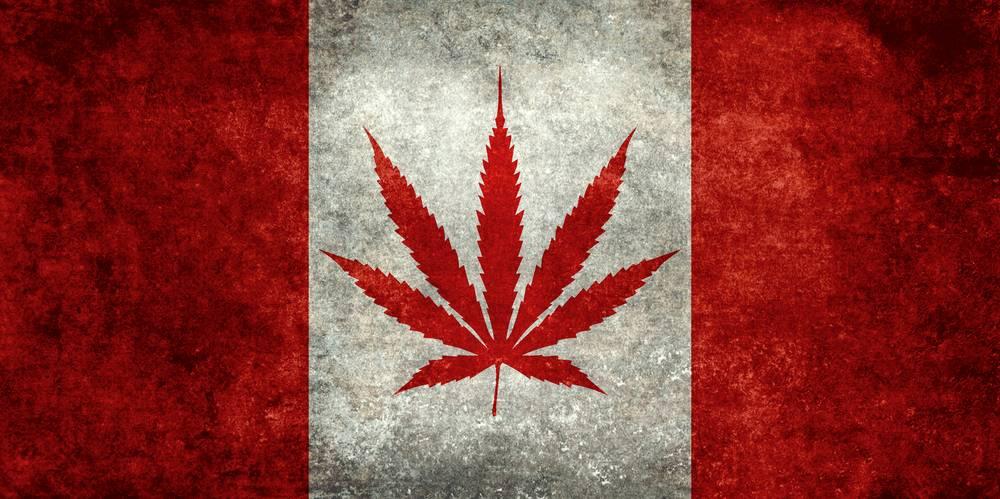 Canada : les députés autorisent la production et la consommation de cannabis