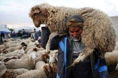 Tunisie: Le prix des moutons de l'Aïd Al Idha fixé