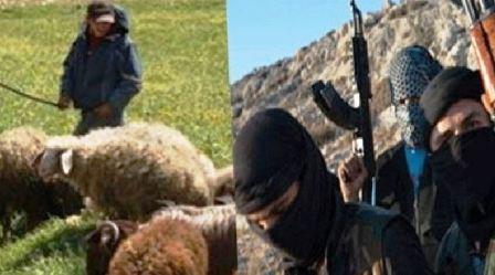 Tunisie – Kasserine: Des terroristes volent des moutons à un berger au Mont Salloum