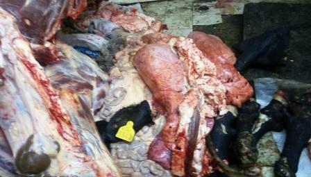Tunisie – Vidéo: Sfax: Destruction de grandes quantités de viandes impropres à la consommation