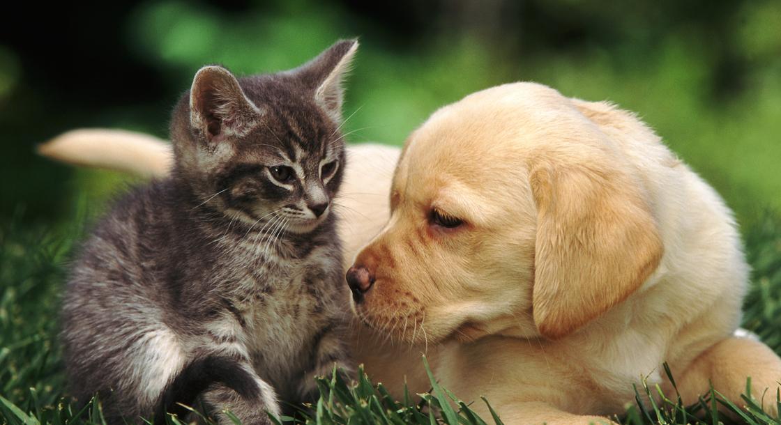 Belgique- Un permis pour pouvoir adopter un animal est exigé en Belgique