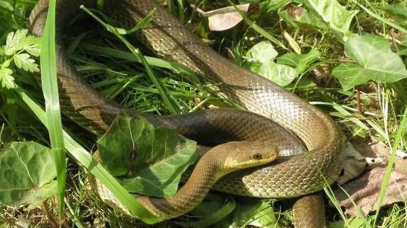 Tunisie: Une ouvrière agricole mordue par un serpent pendant la cueillette de fruits dans une ferme à Kairouan