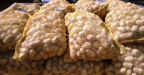 Tunisie – Les pommes de terre importées d'Egypte sont impropres à la consommation