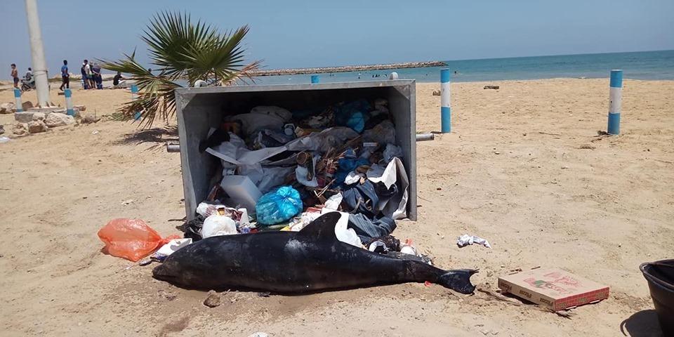 Tunisie: Un dauphin retrouvé échoué sur une plage à Sfax