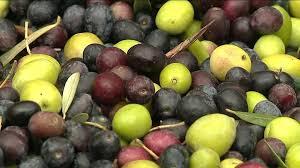 Tunisie : Des agriculteurs protestent contre la baisse des prix des olives à Kairouan