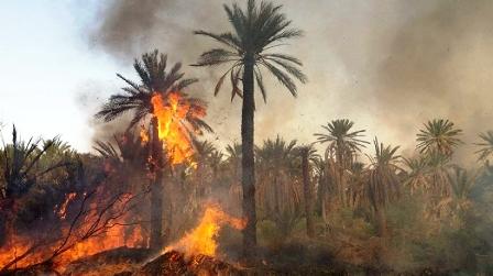 Tunisie – Un incendie ravage une palmeraie à Hammet El Jerid