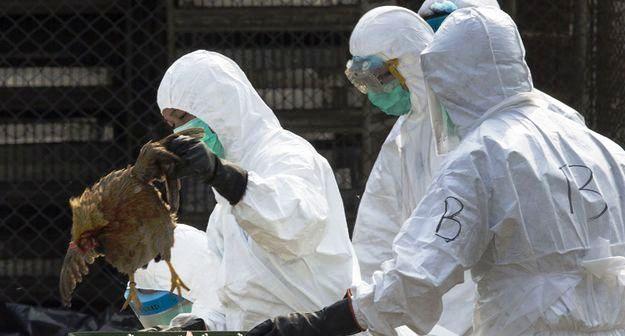 Découverte d'une nouvelle épidémie de grippe aviaire H5N1 — Chine