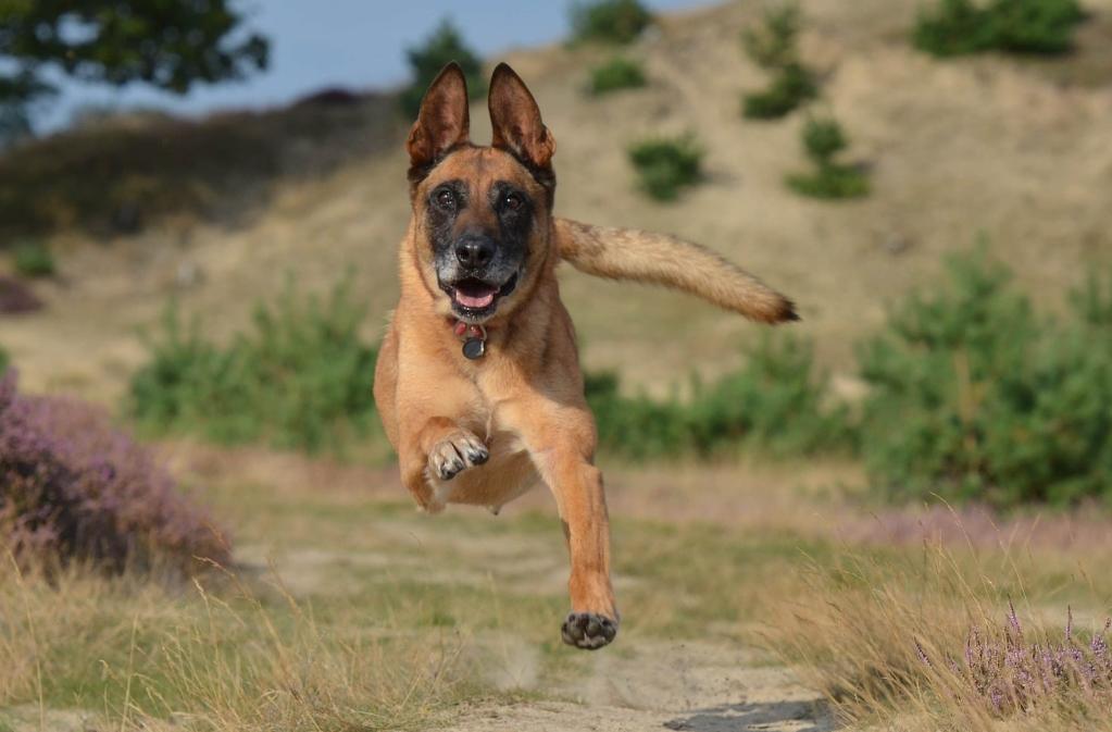 France: chiens renifleurs de Covid-19