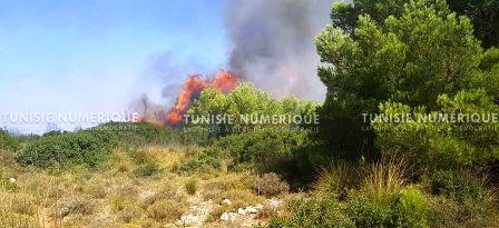 Tunisie – IMAGES: L'armée intervient sur un énorme incendie qui ravage le Jebel Sabah à Amdoun