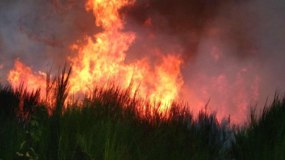 Tunisie : Un immense incendie ravage 30 ha au gouvernorat de Bizerte