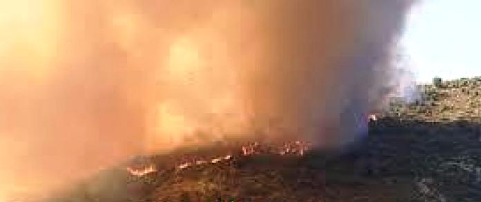 Tunisie – Béja: Deux feux de forêt simultanés à Nefza et Amdoun