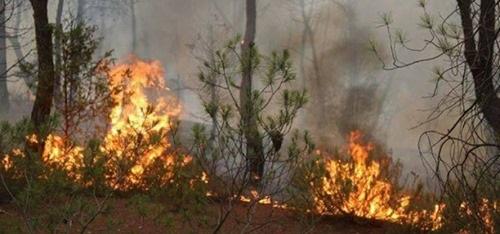 Tunisie – Reprise de l'incendie au sommet du Mont Nador à Ghar el melh