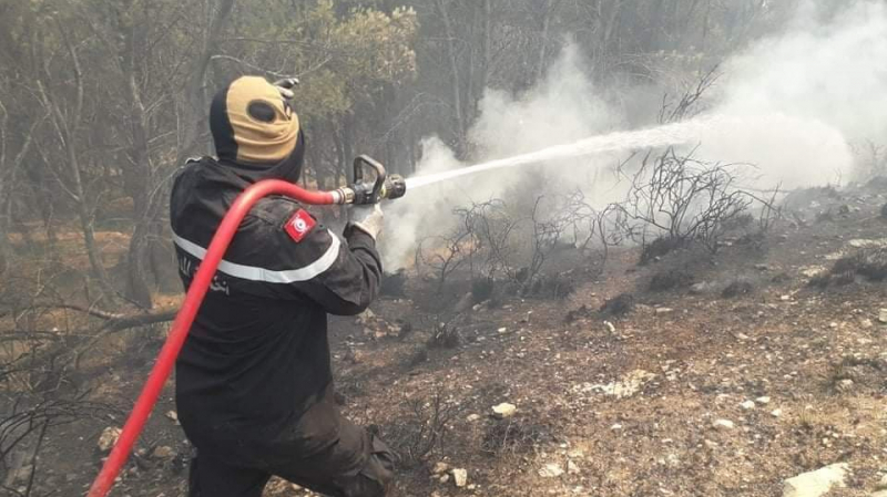 Tunisie: Les incendies ayant ravagé 52 ha de forêt à Amdoun et Nefza, maîtrisés