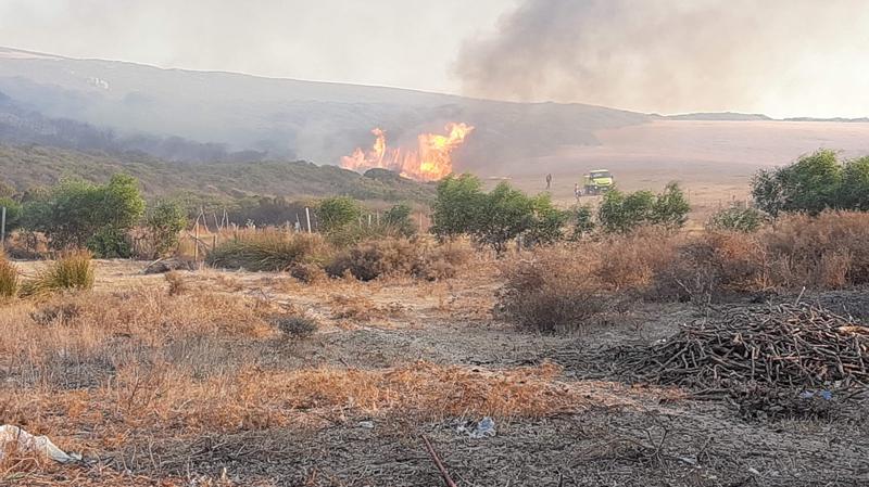 Tunisie: 20 ha de forêt ravagés par un incendie à Bizerte