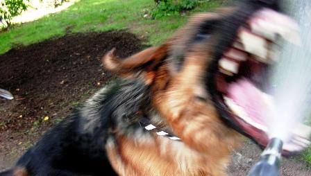 Tunisie – Un délinquant lance son chien d'attaque contre une jeune fille