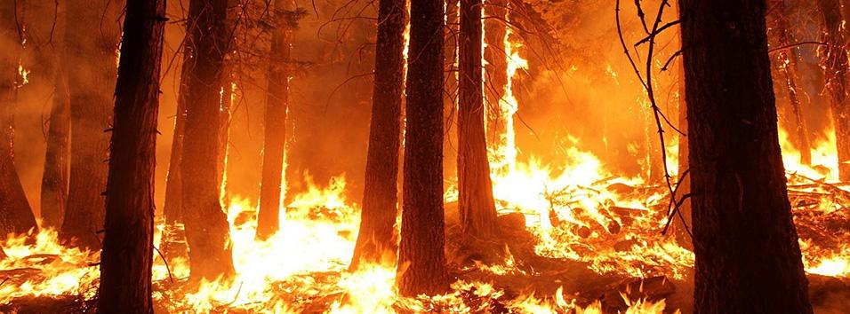 USA : Feux de forêts: au moins 23 morts dans la côte ouest