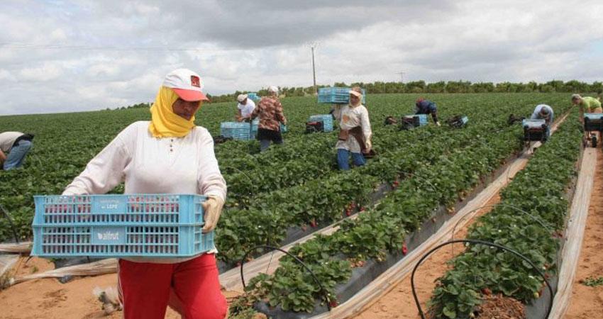 Tunisie: Baisse des investissements agricoles privés