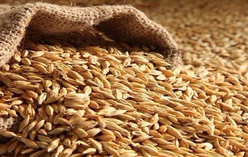 Tunisie: 2210 mille tonnes de céréales importées en 8 mois en 2020