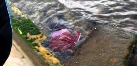 Tunisie – Découverte du cadavre d'un adulte dans le bassin du port de pêche de Sousse
