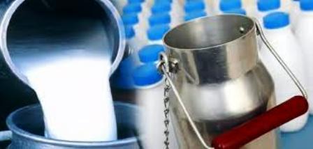 Tunisie- 500 mille litres: La quantité de lait non acceptée quotidiennement par les centrales laitières