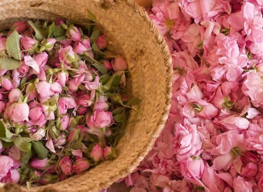 Tunisie: Festival des Roses à l'Ariana du 4 au 20 juin 2021