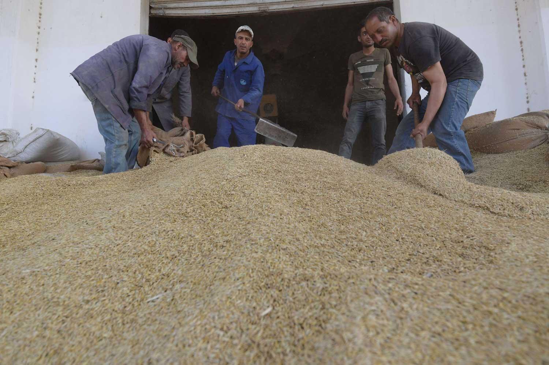 La hausse vertigineuse des importations des céréales, augmente le déficit alimentaire de 172%