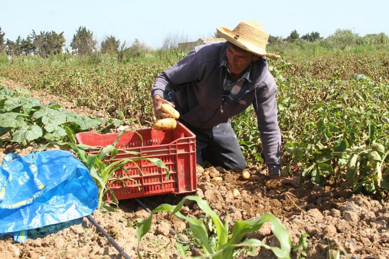 CNUCED : La Tunisie est dépendante des exportations de produits de base