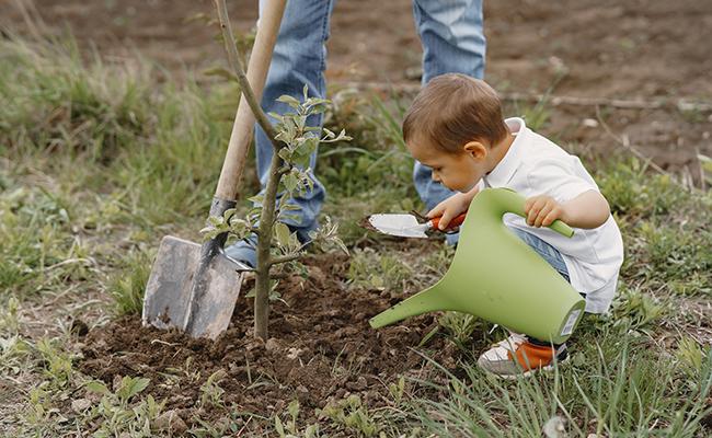 Une initiative pour planter 2 millions d'arbres dans les zones touchées par les incendies