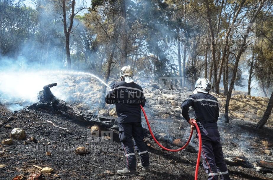 Protection civile: Plus de 300 interventions recensées hier