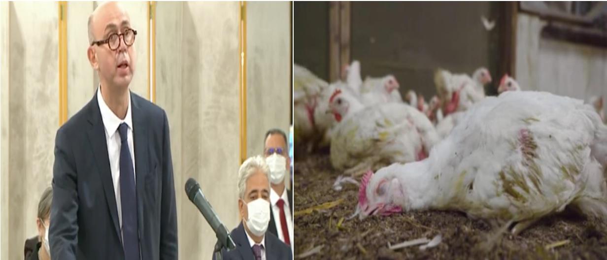 Agriculture : le nouveau ministre pourra-t-il mettre fin aux agissements de la mafia de l'alimentation animale ?