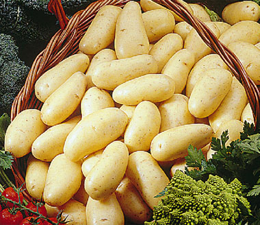 tunisie 750 millimes prix fix pour les pommes de terre part 142660. Black Bedroom Furniture Sets. Home Design Ideas